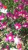 Парад тюльпанов Никитский  ботанический сад_15