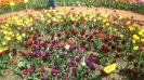 Парад тюльпанов Никитский  ботанический сад_16