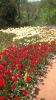 Парад тюльпанов Никитский  ботанический сад_22