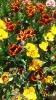 Парад тюльпанов Никитский  ботанический сад_33