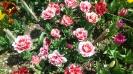 Парад тюльпанов Никитский  ботанический сад_34