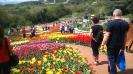 Парад тюльпанов Никитский  ботанический сад_48