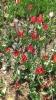 Парад тюльпанов Никитский  ботанический сад_8